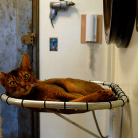 Wall Mounted Steel Cat Hammock