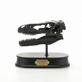 FAVORITE COLLECTION - Deinonychus Skull&Jaws