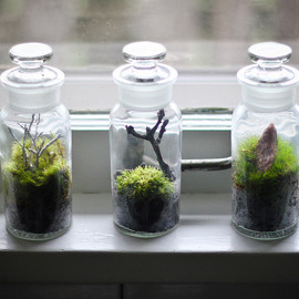 Moss Bottle Trio