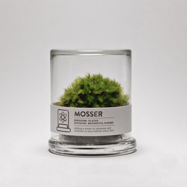 MOSSER - scientific glass moss terrarium and spray bottle