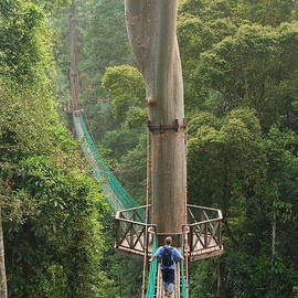 Rainforest Lodge, Borneo - 'Tree Top Canopy Walk'