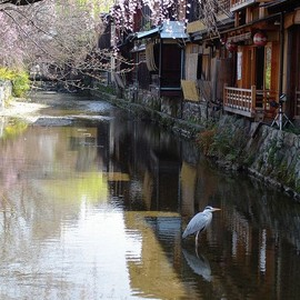 Kyoto - Gion, Kyoto, Japan: photo by knkppr, via Flickr