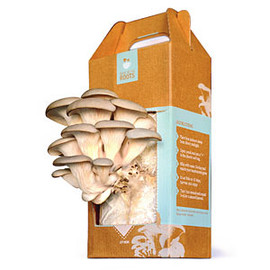 Back to the Roots - At Home Mushroom Growing Kit