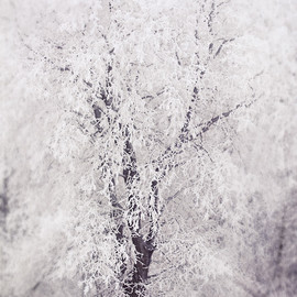 Luulla - Winter Wonderland Frost Trees in Woods Art Photography, 5x7 Print