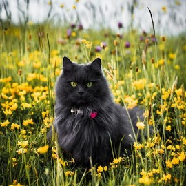 cat - Cat...Just another yellow blossom :) ~ Photo by Twig's Branch Photography